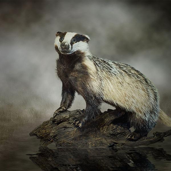 Wildlife Fantasy